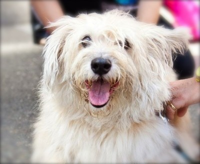 Senior Rescue Dogs San Francisco