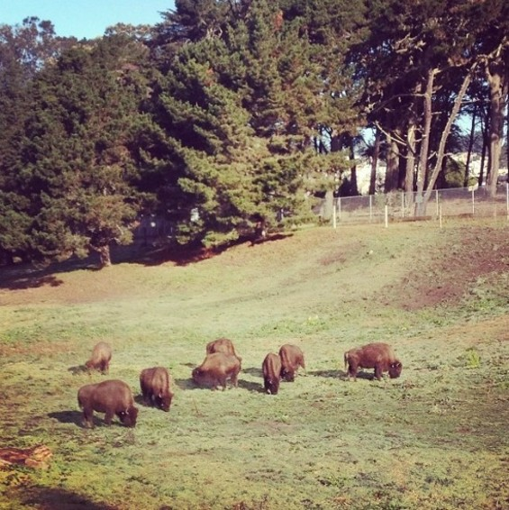 Tons of Beef. Literally. - JUAN DE ANDA/SF WEEKLY