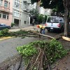 Heads Up: Tree Down at Powell and Bush