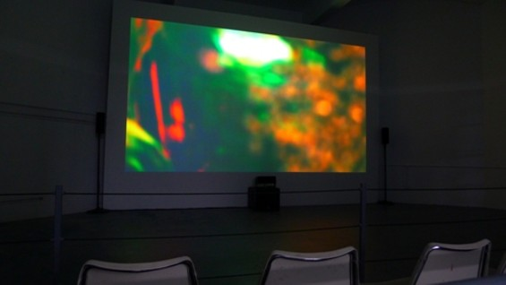 Truth be told, if it were not for the smell, one might forget they were at the zoo at all: Jackson's video and sound art installation would not seem out of place at SFMOMA.