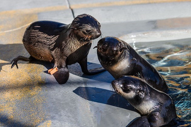 COURTESY MARINE MAMMAL CENTER