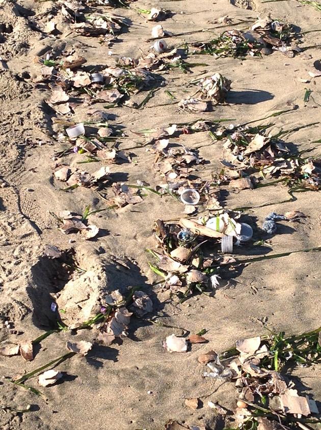 aq_beach_debris_1.jpg
