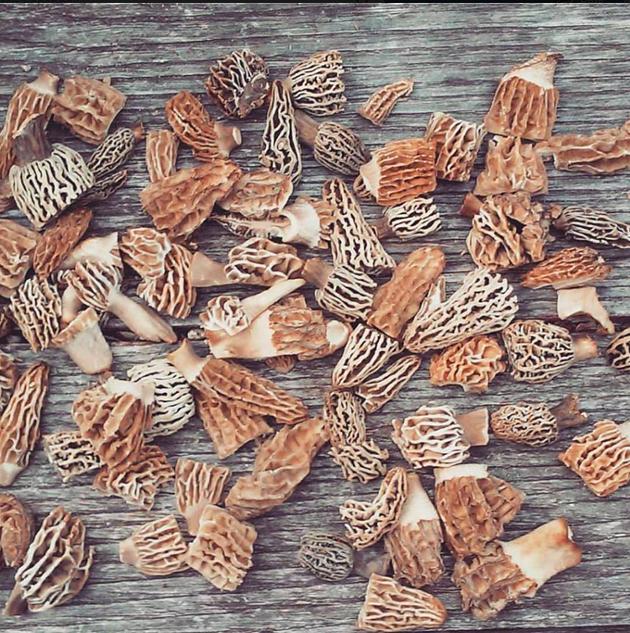 Morel mushrooms - INSTAGRAM/BRIAN BLUTH