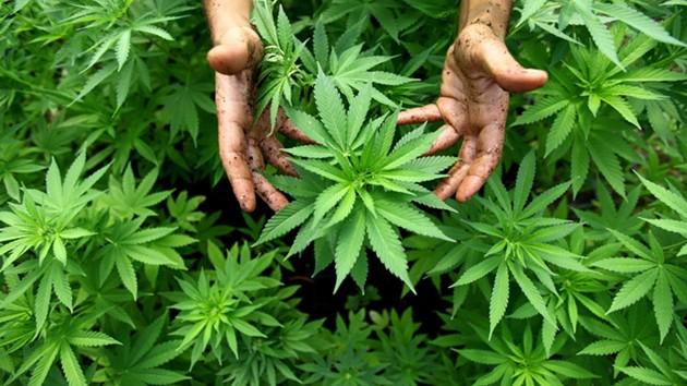 weed-dispensary-ban-051714975000.jpg
