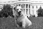 Snoopy Presents: Lucky Dogs and Presidential Pets Exhibition