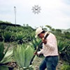 The Myth of Mezcal