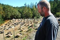 "CHRIS ROBERTS - ""Oaky"" Joe Munson surveys the hillside where his cannabis plants once stood."