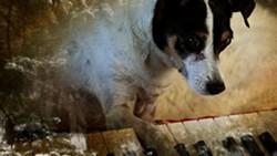 film3-heartofadog-3c9611f17fe7cf56.jpg