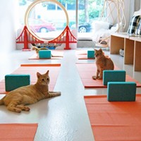 Cats on Mats (Yoga with Cats)