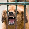 Vicious Dogs Roaming Through Golden Gate Park -- Joggers Beware