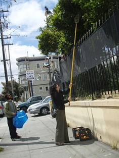 Volunteer fruitistas harvesting the urban orchard. - SF GLEAN