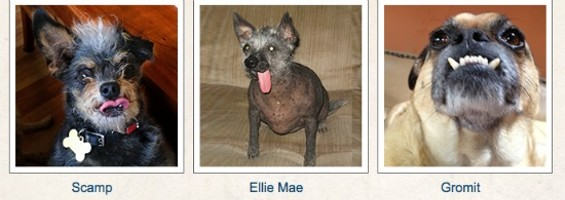 VIA WORLD'S UGLIEST DOGS/MARIN COUNTY