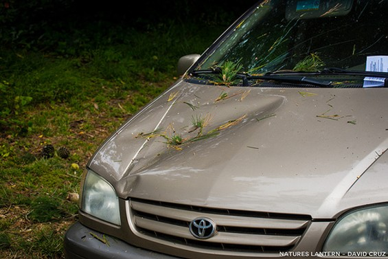 Wait, is that a parking ticket, too??!! - DAVID CRUZ/NATURES LANTERN