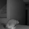 Watch This House Cat Get Spooked by Palo Alto Burglars (VIDEO)