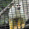 Won't You Save the Squirrel Monkeys? Andalu's Hosting a Benefit