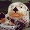 We Salute the Otters Among Us!