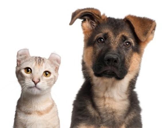 dog_and_cat_350.jpg