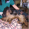 "Peninsula Humane Society Offers $5,000 Reward in ""Horrific"" Dog Cruelty Case"