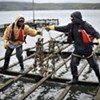Drakes Bay Oyster Co. to Close July 31, Unless Restaurant Lawsuit Miraculously Saves Farm