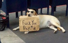 World's cutest beggar - INFINITEDBAG VIA FUNNYJUNK.COM