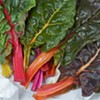 Your Seasonal Produce Guide: Chard