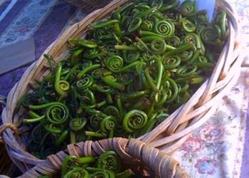 Your Seasonal Produce Guide: Fiddlehead Ferns