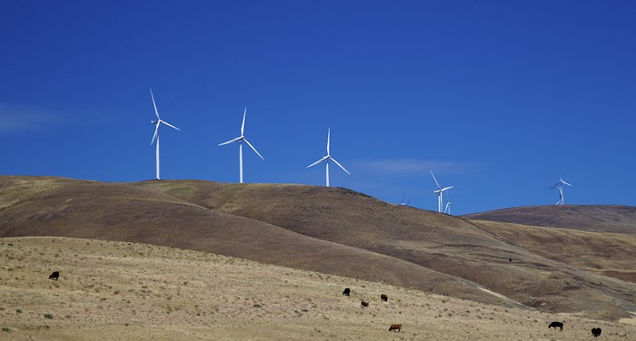Windmills and non-ghost cattle along the Columbia River Gorge.