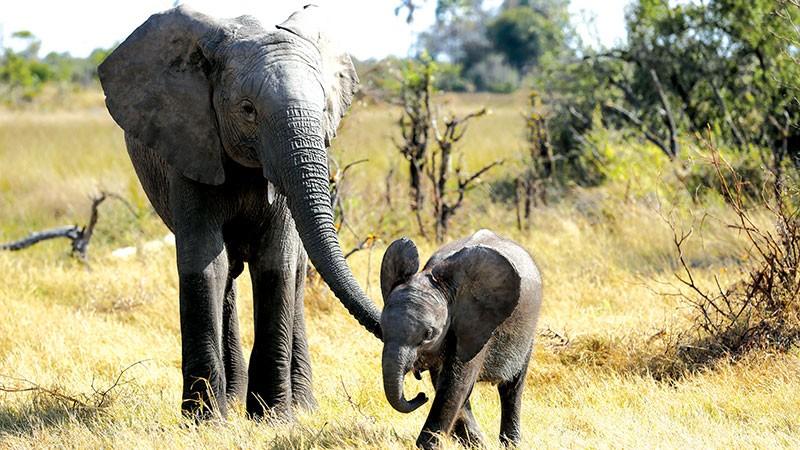 Naledi Elephant