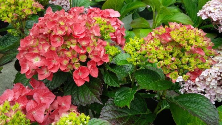 Kubota Garden Plant Sale at Kubota Garden in Seattle, WA on Sat May ...