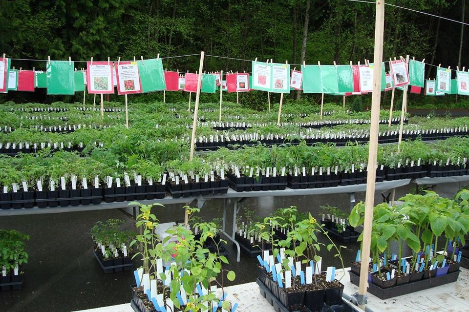 Snohomish County Master Gardener Foundation Plant Sale