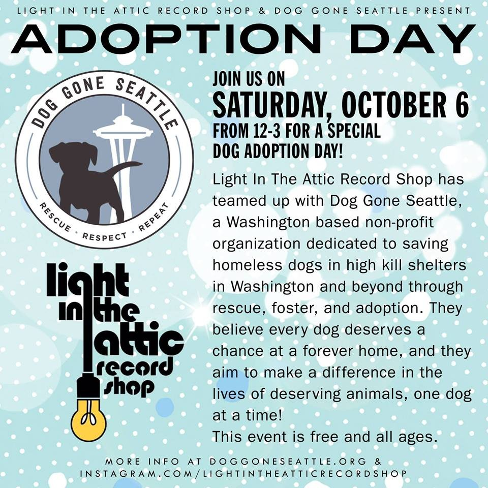 Adoptable Dog Meet And Greet At Light In The Attic Record Shop In