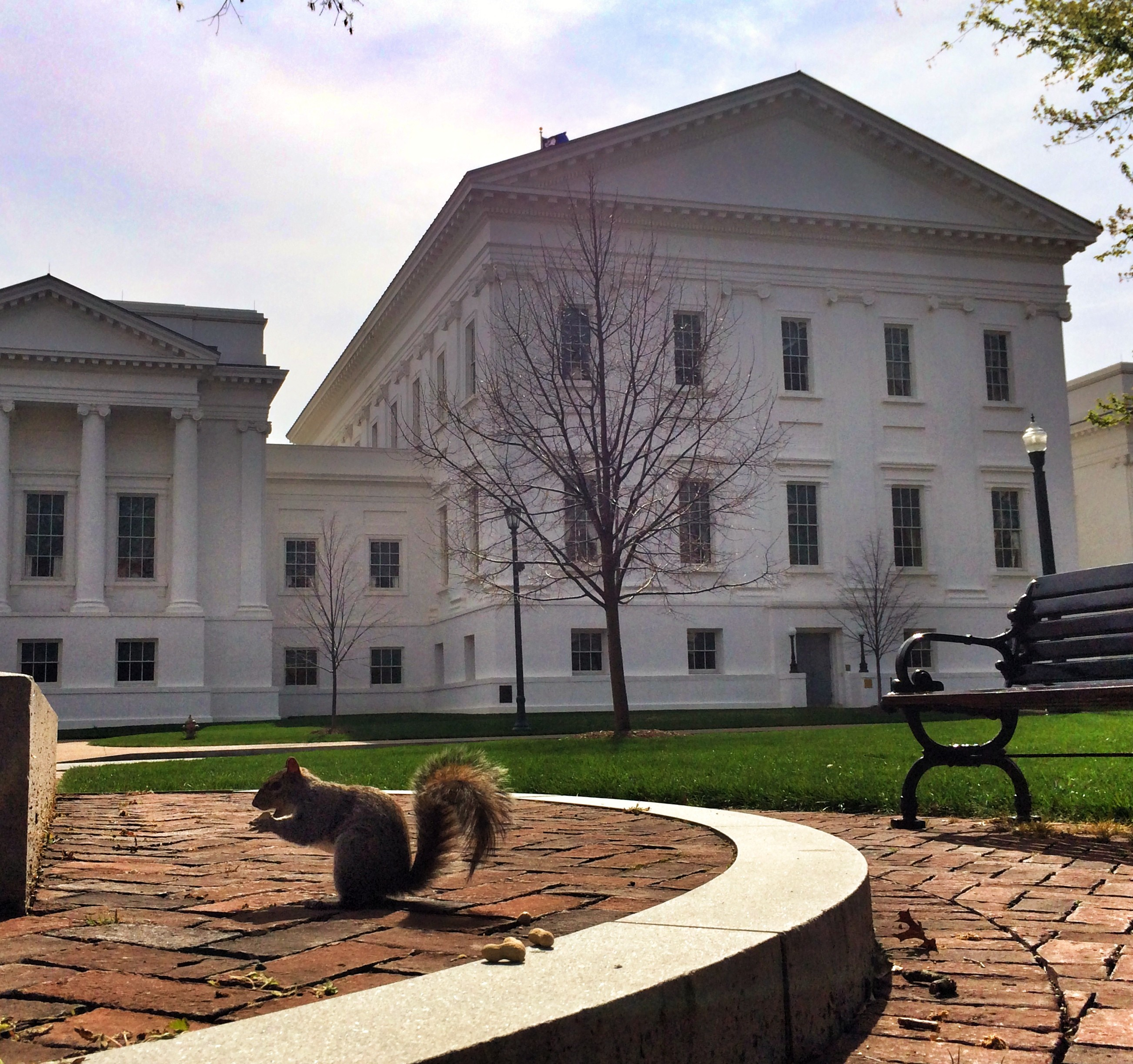 A squirrel shells a peanut left by a visitor to Capitol Square. - NED OLIVER