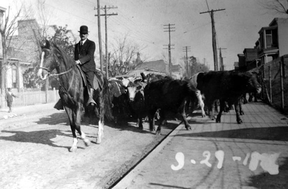 After being unloaded from nearby railcars, cattle are herded west along unpaved West Leigh Street toward Hermitage Road where the Southern Stockyard and Union Stockyard once were. - COPYRIGHT RICHMOND IN SIGHT