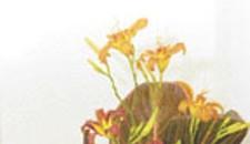 Artisan: Wisdom in Flower
