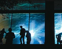 Audience interaction plays a big part at InLight. Passersby explore an exhibit at the 2009 event.