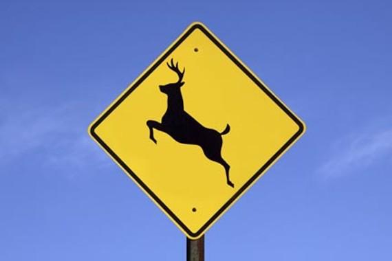 goods_deer_hunting.jpg