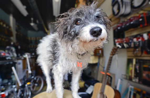 goods_shop_dog_scruffy.jpg