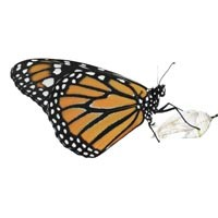night20_butterfly_200.jpg