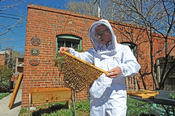 David Stover examines a comb from the hive in the backyard of his Patterson Avenue home. - SCOTT ELMQUIST