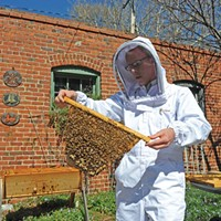 City Bees: The Next Eco-Trend?