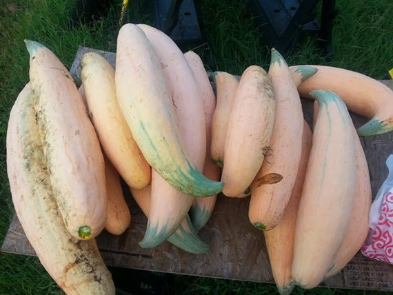 Farm brew: Candy Roaster squash figures big in a new Richmond beer.