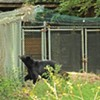 Feds Order Maymont to Secure Bears