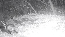 Frisky Otter Cam