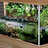 Gardening: Life Under Glass