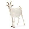 Goading Goats