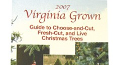 Home Front: Christmas Tree Guide