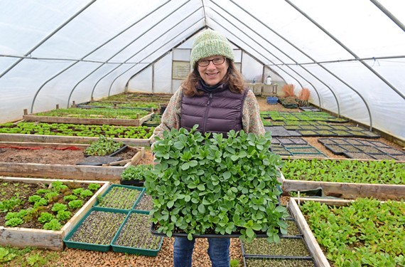 It's been a tough winter: But Manakintowne Specialty Growers — started by Jo Pendergraph with her husband, Rob — continues to supply chefs across town with greens throughout the year.