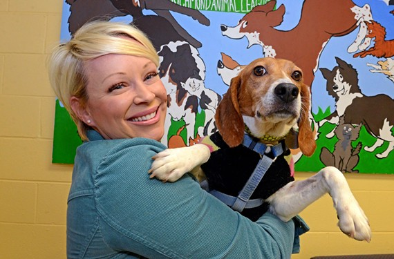 Lauren Brown is fostering Ginger, one of a dozen beagles bred for research that are up for adoption at the Richmond Animal League.
