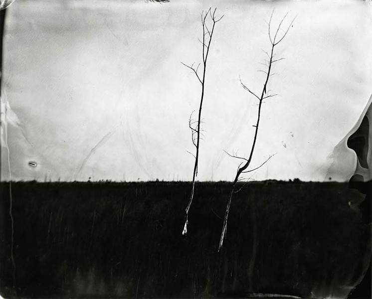 "Lisa Elmaleh's ""Two Trees in Sawgrass"" among 39 works of art included in this year's ""Unbound II"" exhibit."