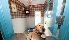 Best Pet Suites